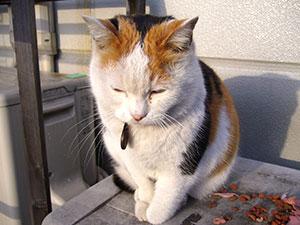 ペットロス(猫)